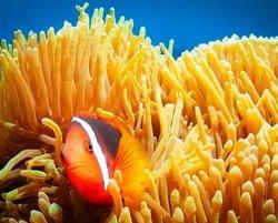 Nemo's cousin