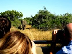 An elephant trails our vehicle