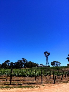 Typical Clare Valley scene