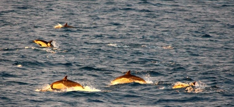 Even more dolphins!