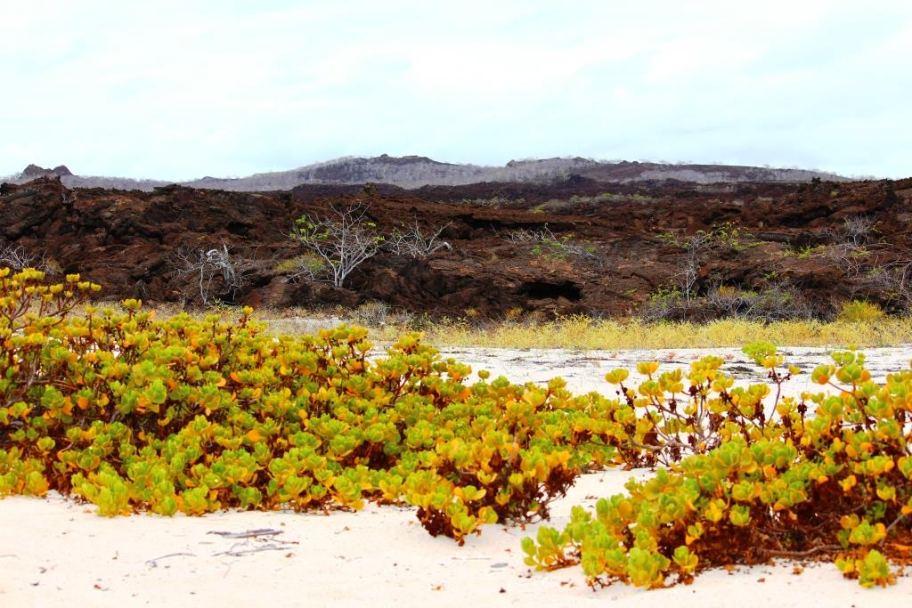 Sandy beach meets lava