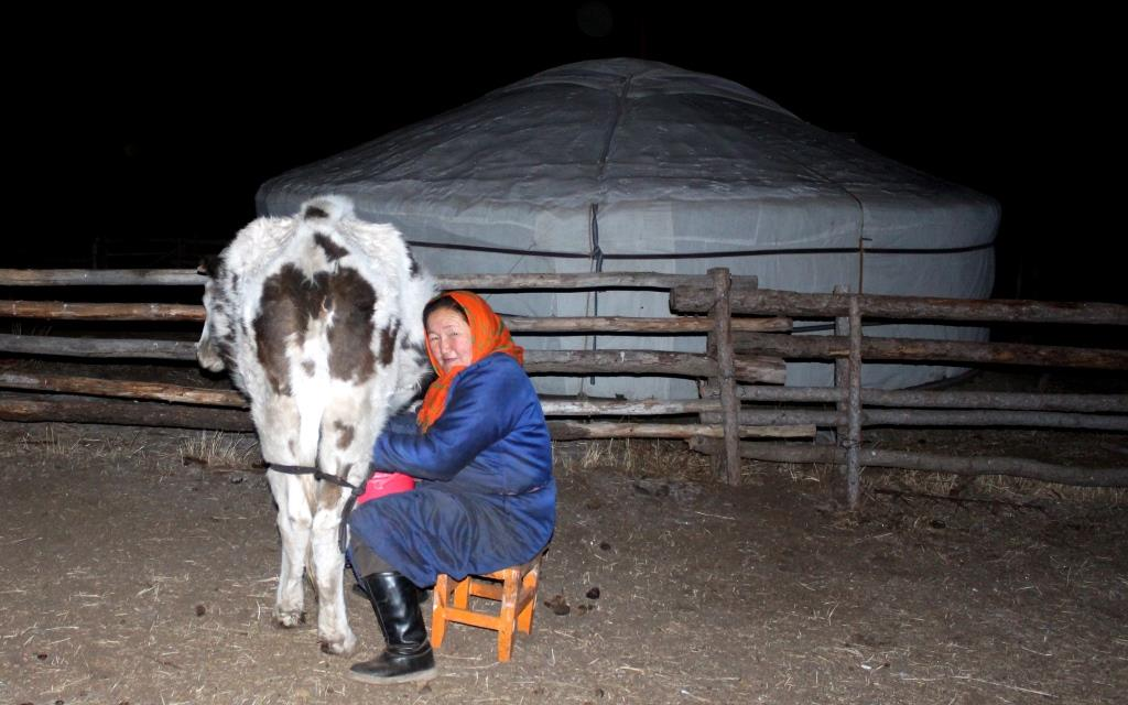 No time to rest, it's time to milk the cow in the middle of the night