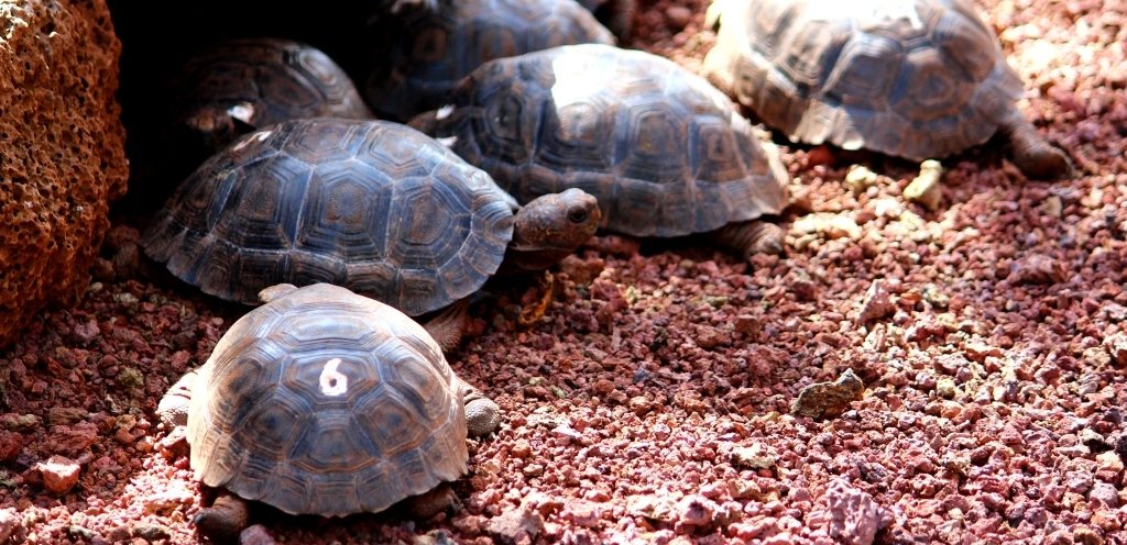 Baby tortoises. Are they numbered for research or for racing?