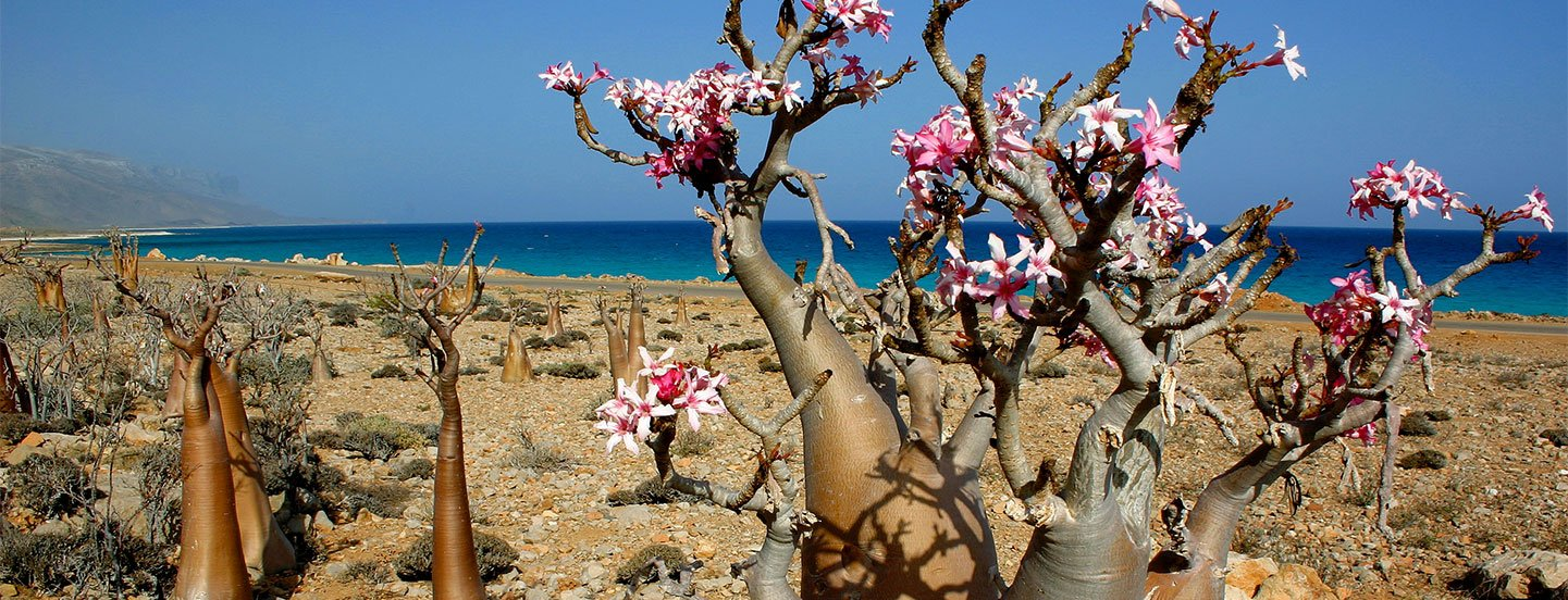 Socotra – The Lost Island | Crooked Compass