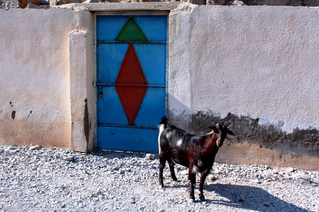 Musandam goat