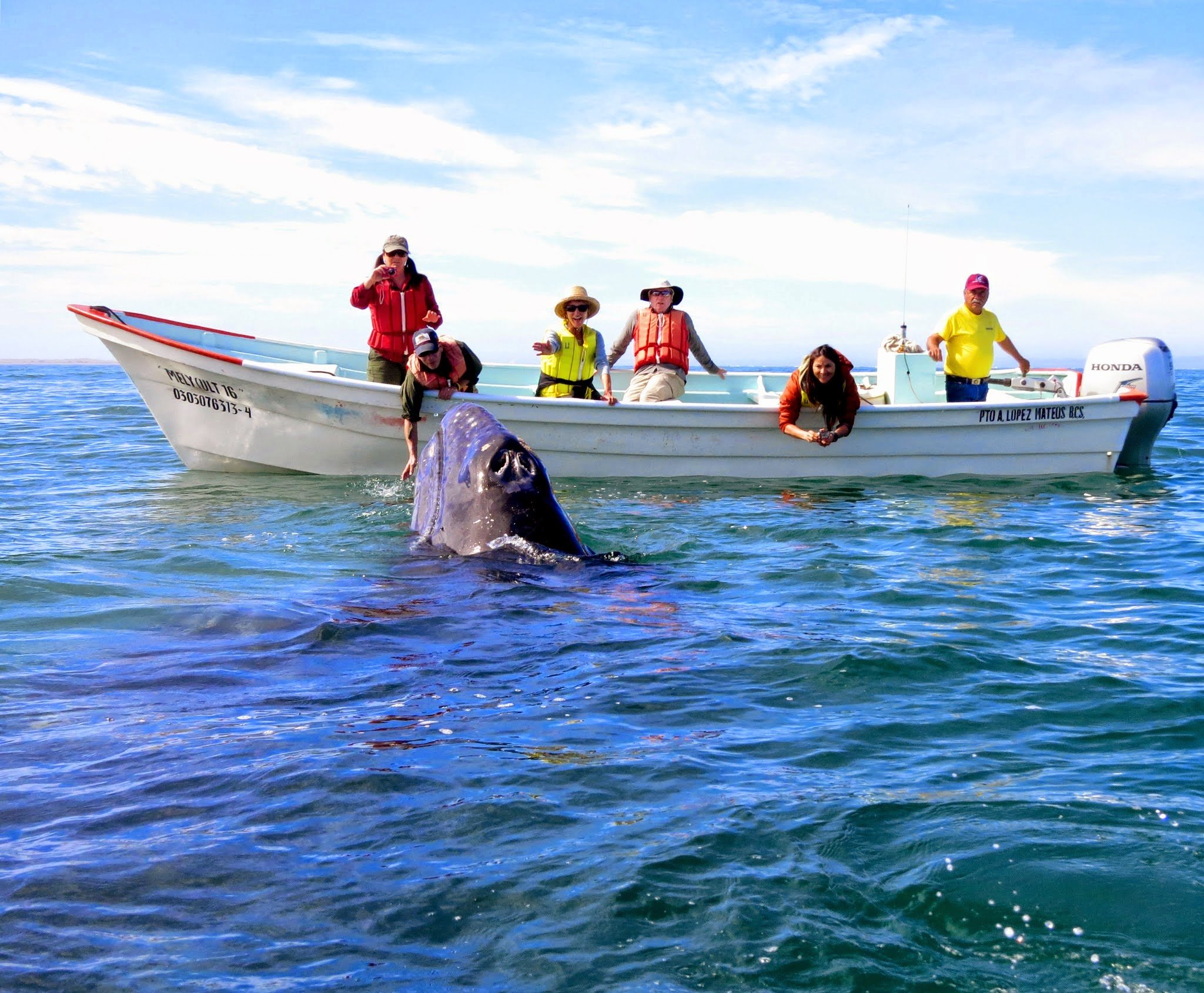 Whale encounter Baja California