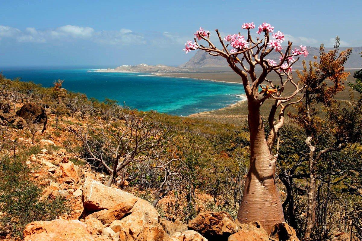 Socotra, Galapagos of Arabia