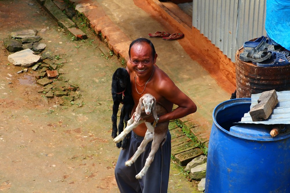 This local villager who is living in a tin shed as his house was lost in the earthquake, proudly smiles showing off his two baby goats.
