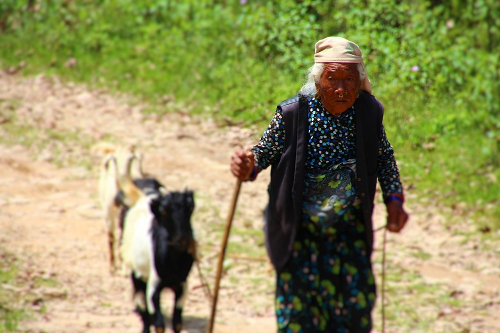 Elderly lady escorts her goat to higher pastures.