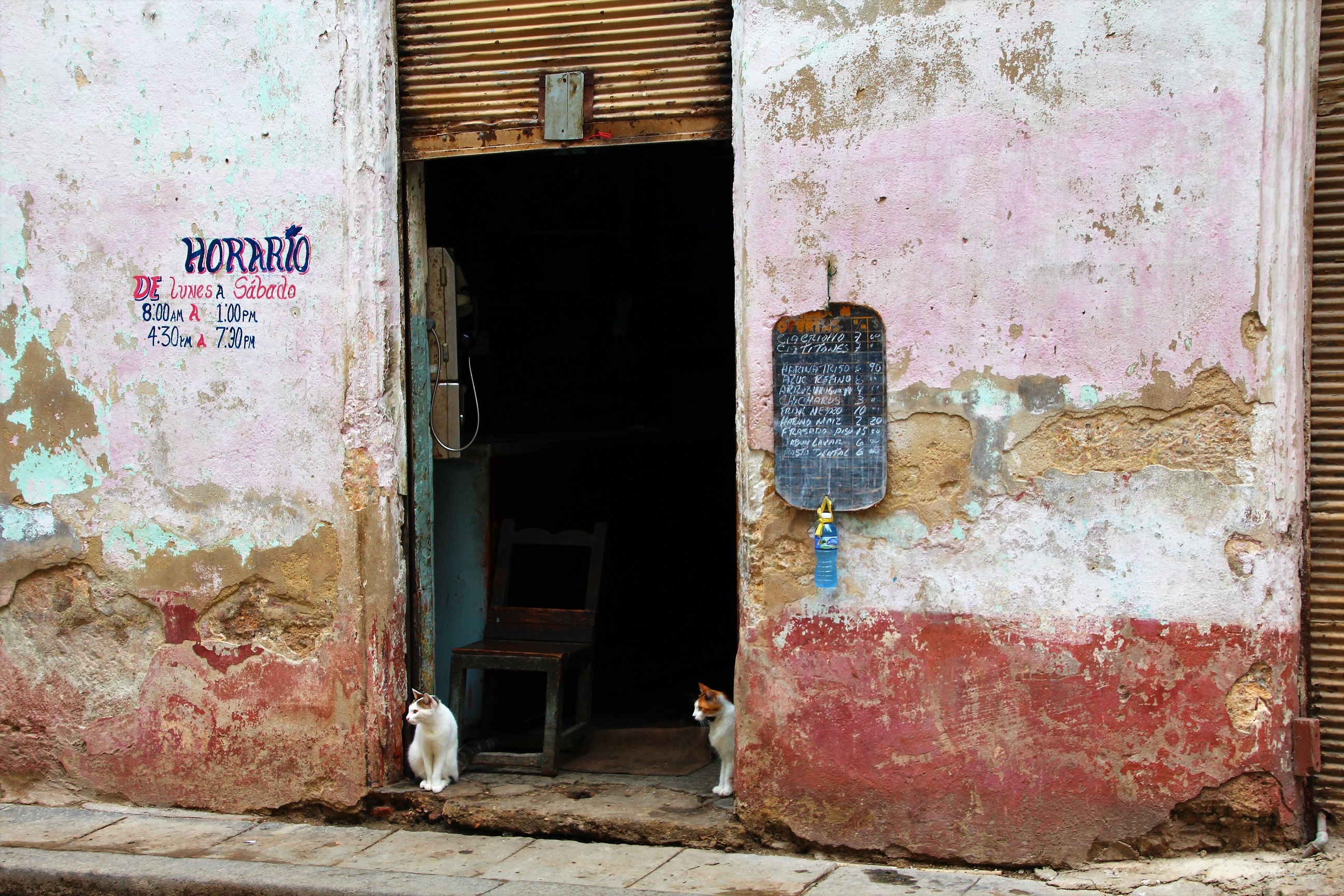 Expect many cats in Cuba - Crooked Compass