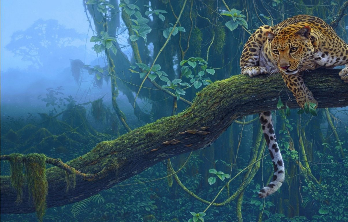 A Jaguar in the jungles of Guyana