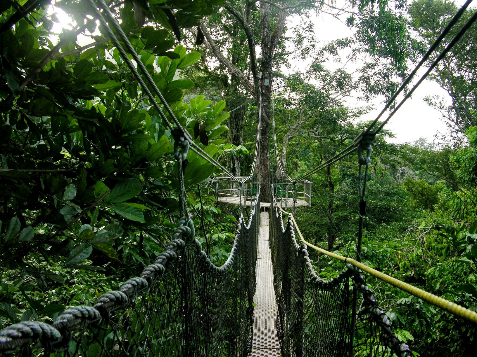 Amongst the tree tops on the Iwokrama Canopy Walk, Guyana