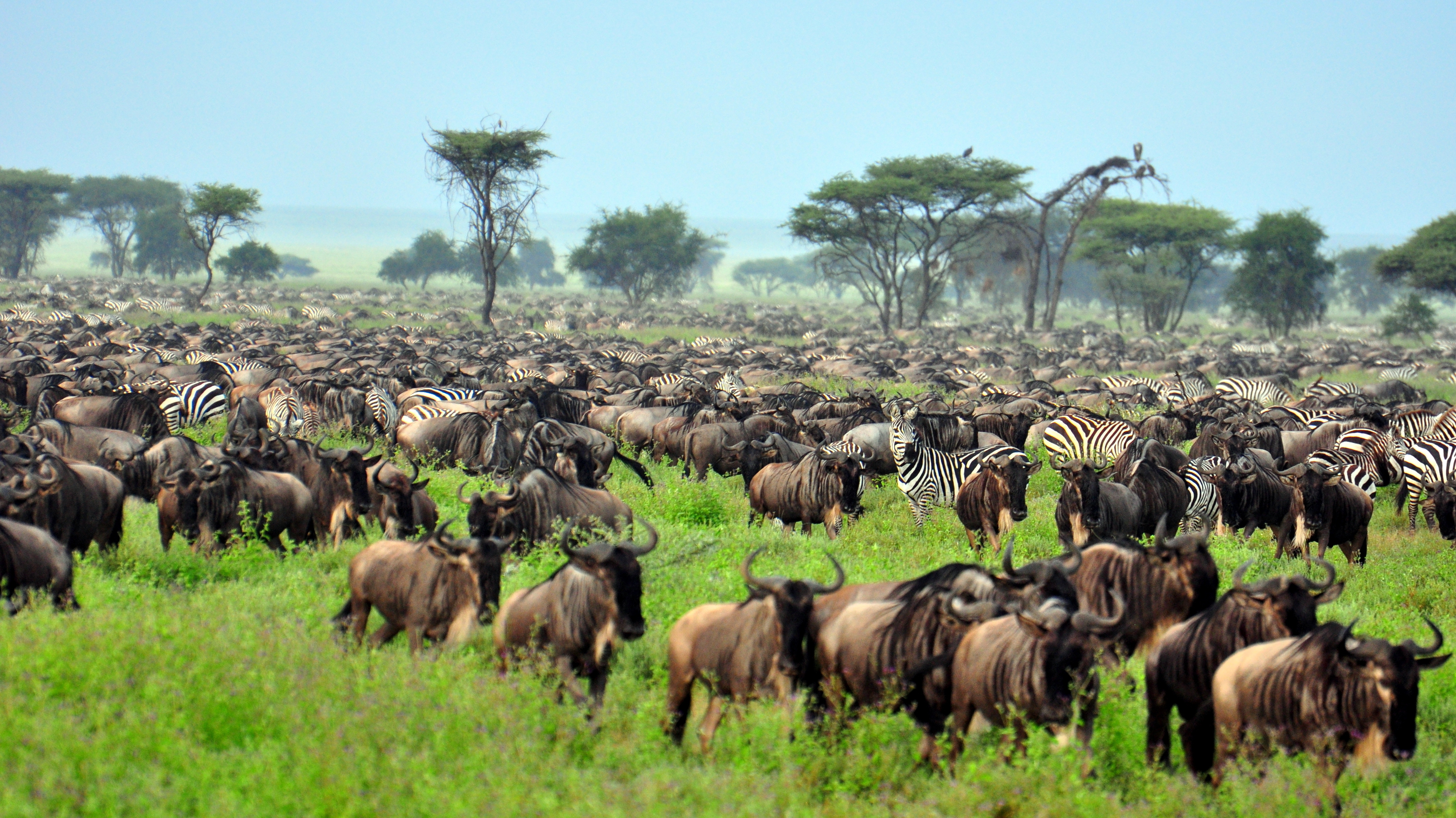 The great migration in Tanzania with Crooked Compass