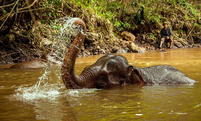 Elephants at the Mondulkiri Project. Photo credit: Mondulkiri Project