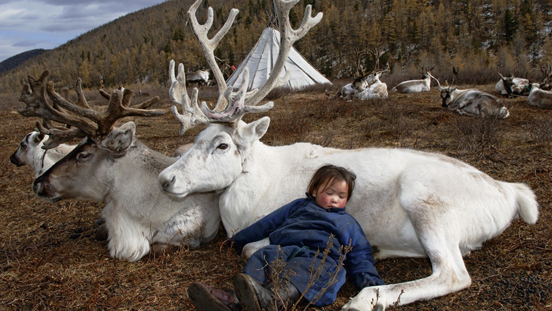 A child asleep on his reindeer