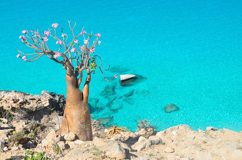 The Jurassic Island of Socotra - Lisa's dream destination.
