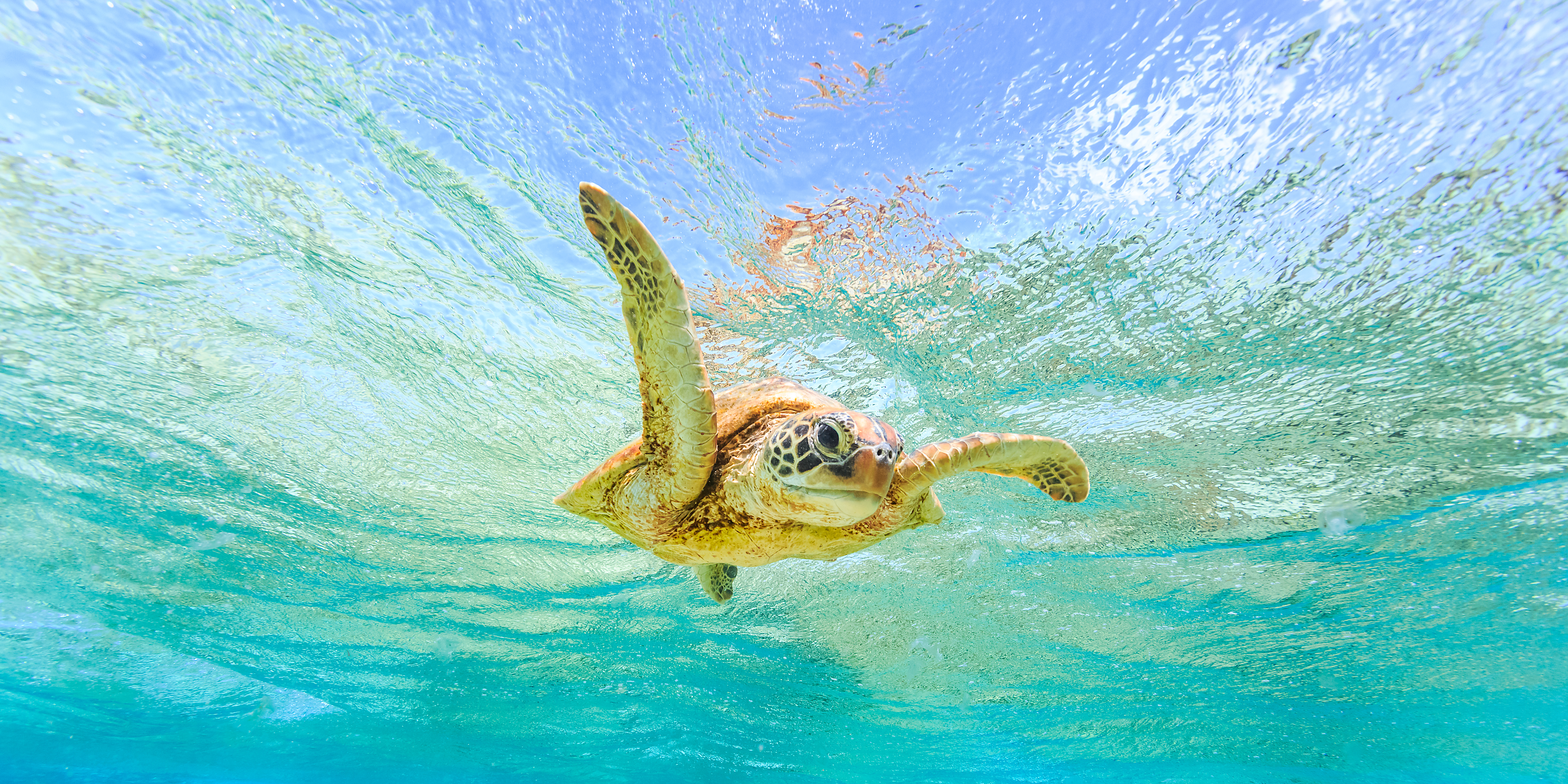 These waters teem with marine life, including an abundance of turtles and dugong
