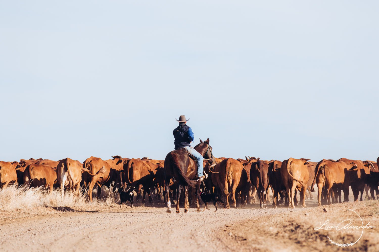 Mustering on the cattle station