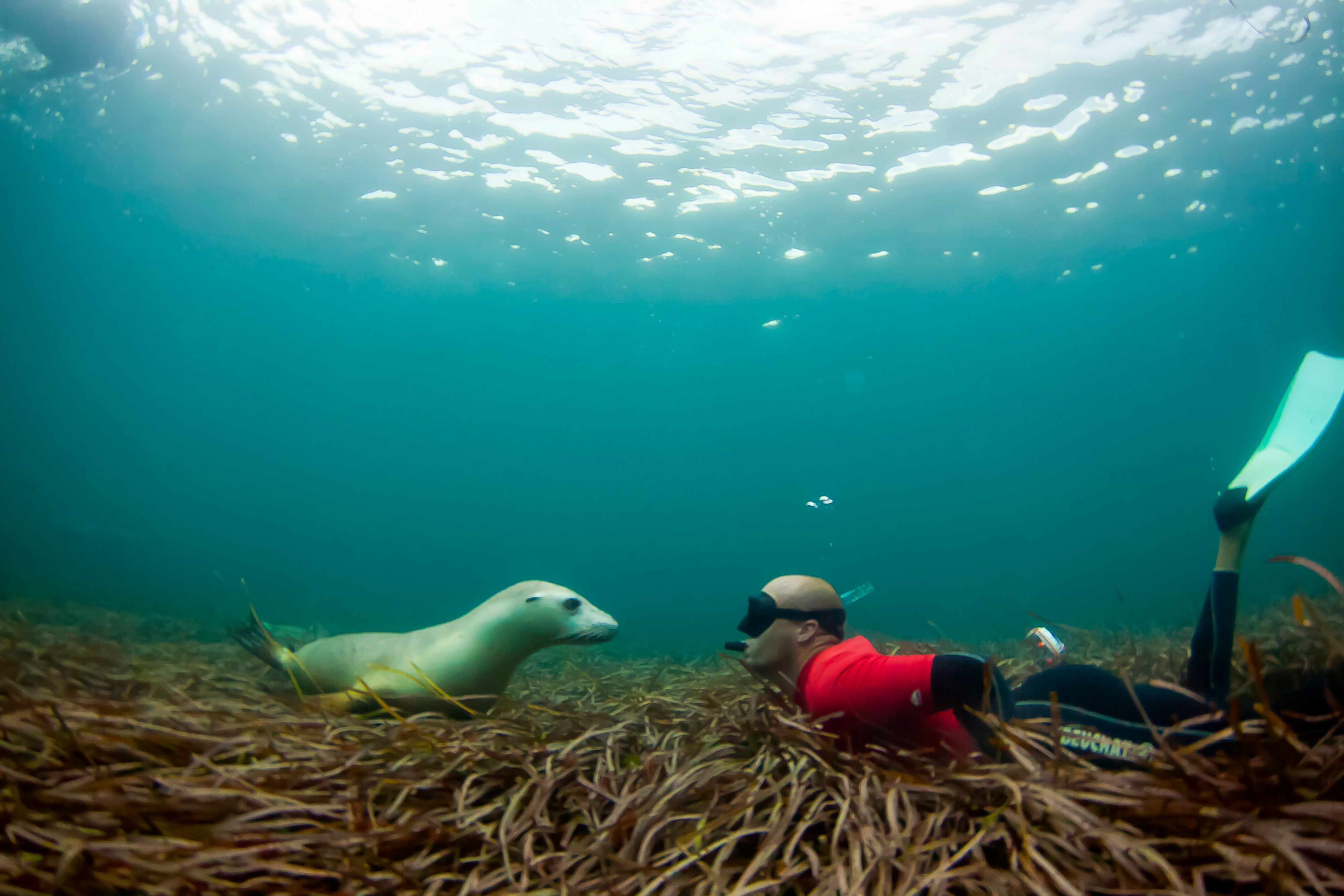Swimming with the Sea Lions - Photo credit: Adventure Bay Charters